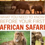 What You Need to Know Before Your First African Safari