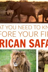know-before-first-african-safari-tips-560