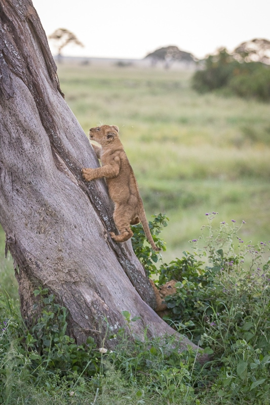 Dreaming about camping in the Serengeti? Here's what you need to know.