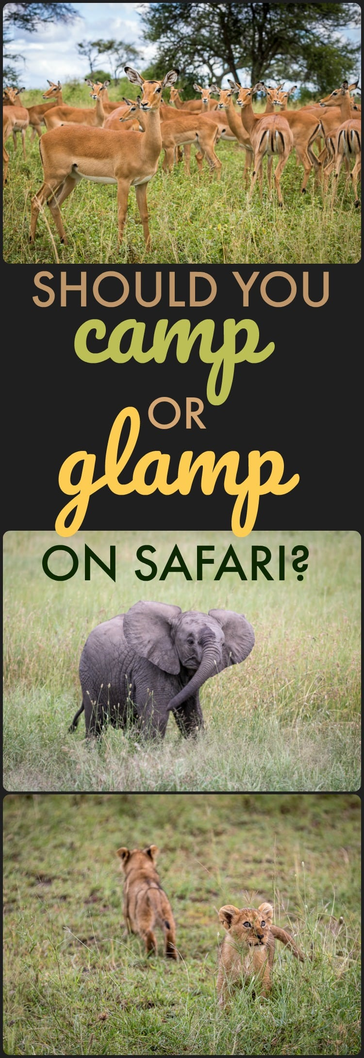 Is glamping worth the extra cost? This blogger went on two safaris - find out which one is right for you: CAMP or GLAMP?