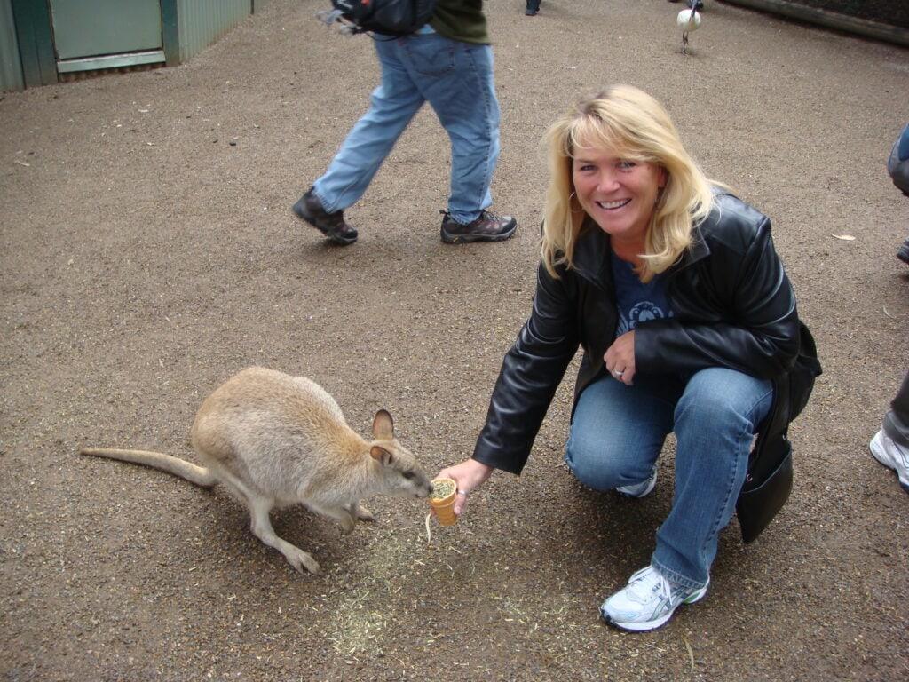 Feeding a kangaroo in Sydney, Australia